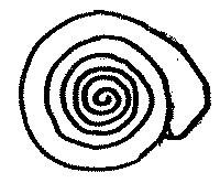 Zatoczek ostrokrawędzisty Anisus vortex