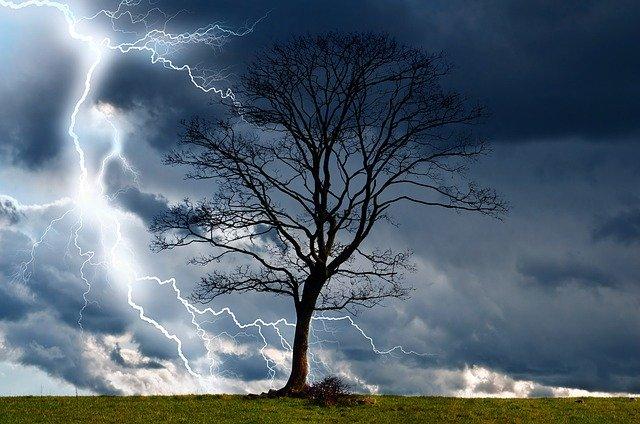 drzewo z piorunami