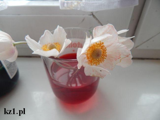zabarwianie białych kwiatów