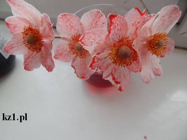 kwiaty zabarwione na czerwono