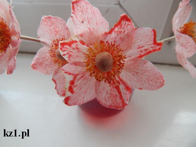 czerwono zabarwiony kwiat