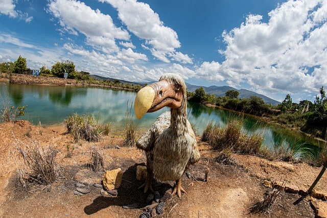 dodo wymarłe