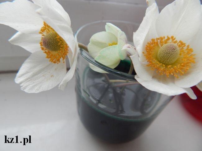farbowanie białych kwiatów w barwnikach spożywczych