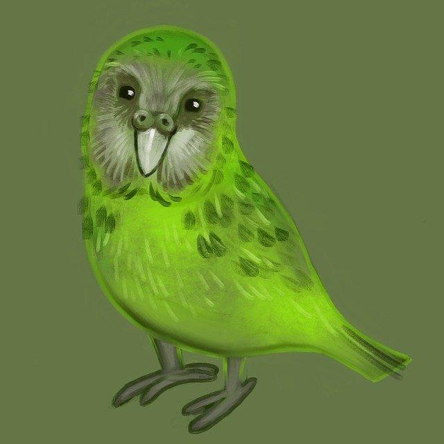 kakapo papuga