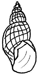 Błotniarka pospolita Stagnicola palustris