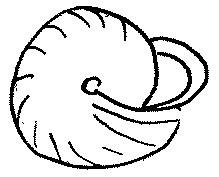 monachoides incarnatus