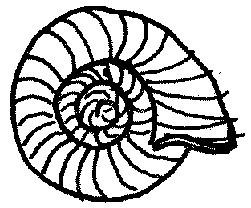 Zatoczek rogowy Planorbarius corneus