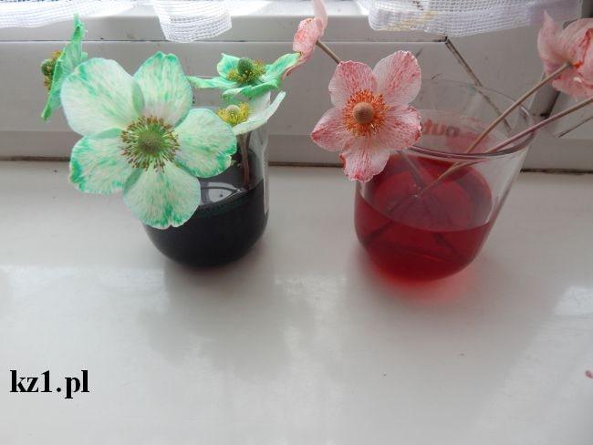 zabarwione barwnikiem kwiaty