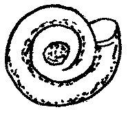 Szklarka obłystek Zonitoides nitidus