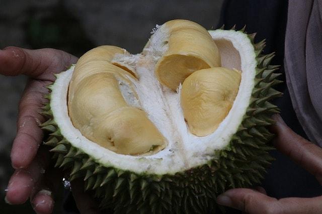 śmierdzący owoc durian