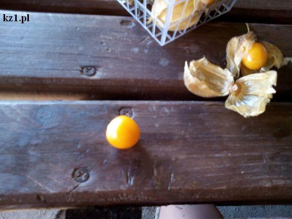 owoc miechunki physalis