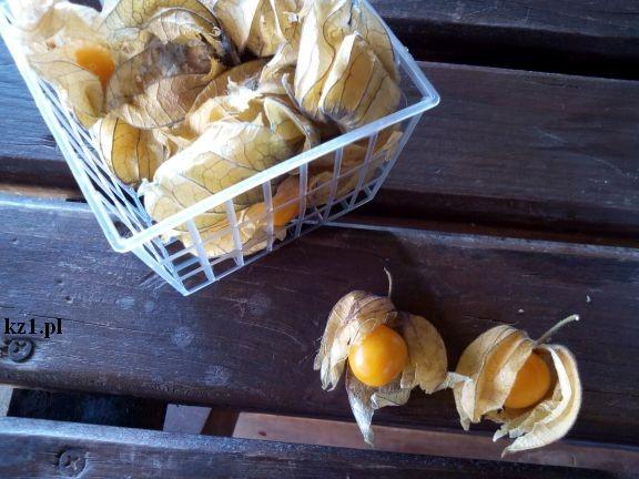 miechunka owoc