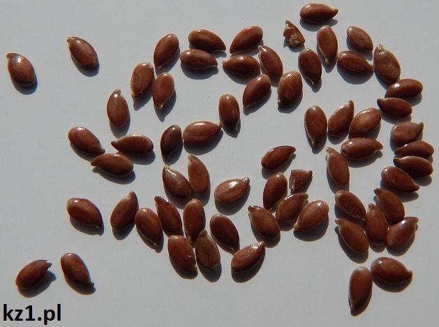 nasiona siemie lniane