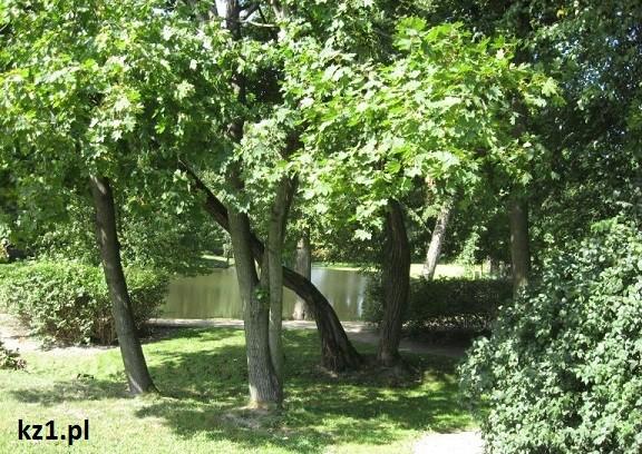 drzewa w szafarni