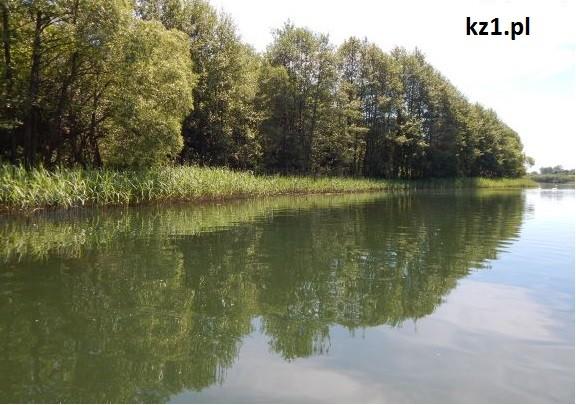 jezioro i widok na drzewa