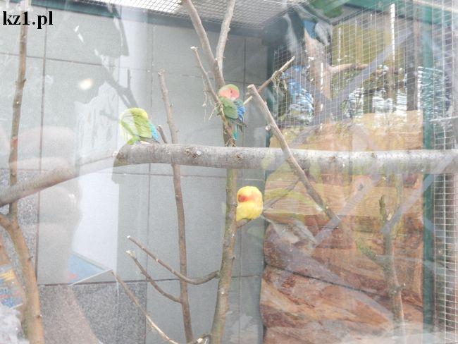 kolorowe papużki w toruńskim zoo
