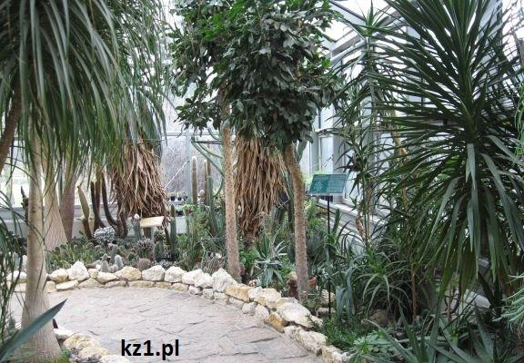 spacer wśród kaktusów w palmiarni