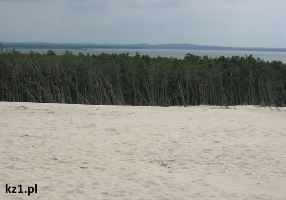 martwy las na wydmach