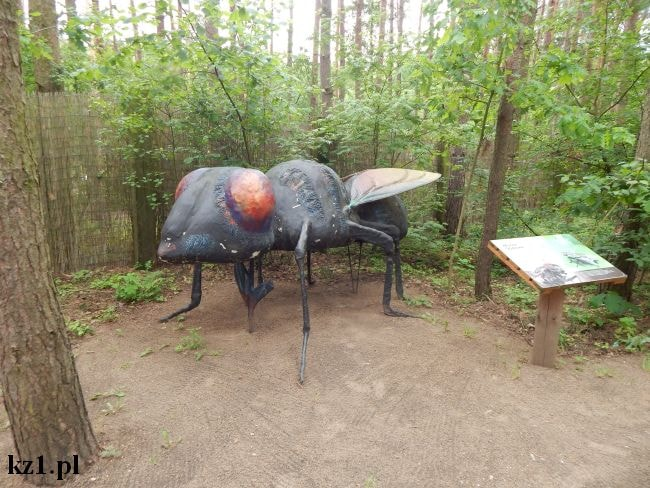 mucha domowa duża