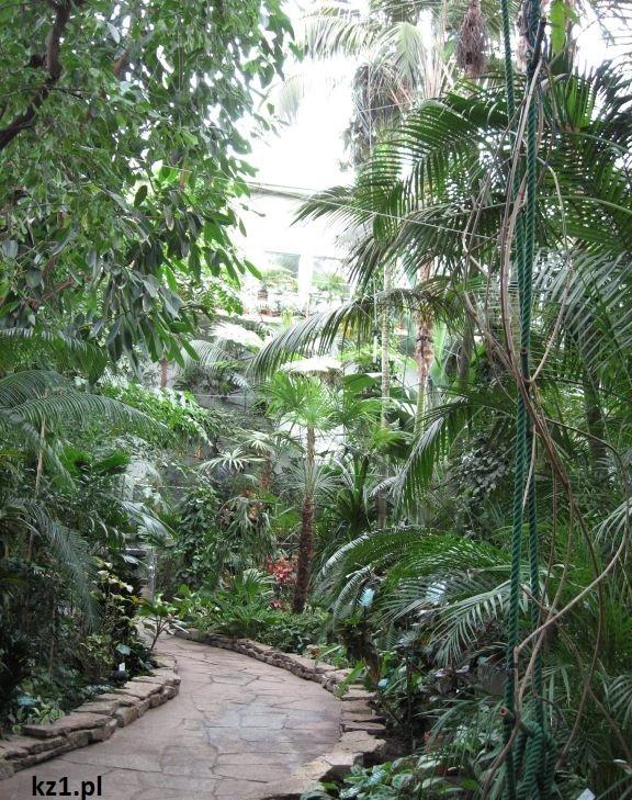 alejki w palmiarni