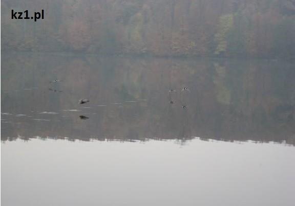 ptaki lądujące w jeziorze