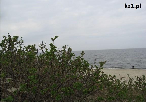 roślinki na plaży