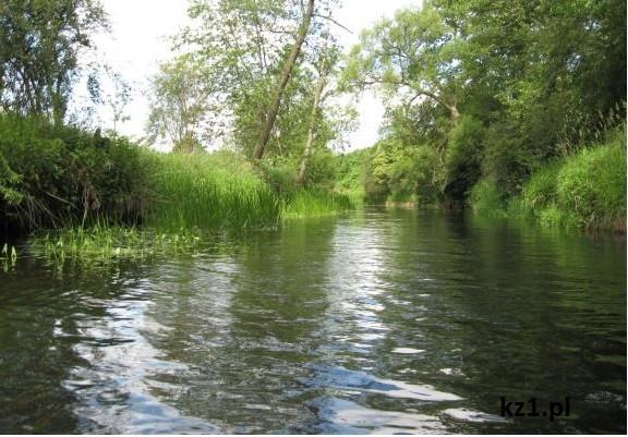 rzeka skrwa