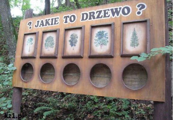 jakie to drzewo zagadki dla dzieci