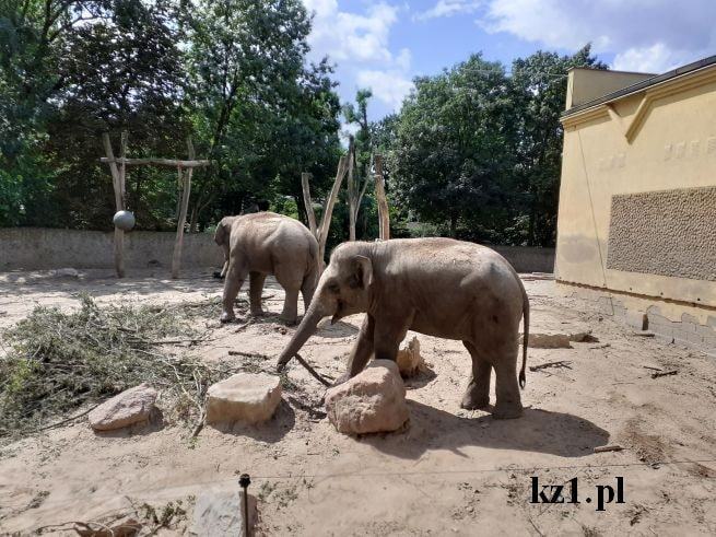 słonie w zoo w płocku