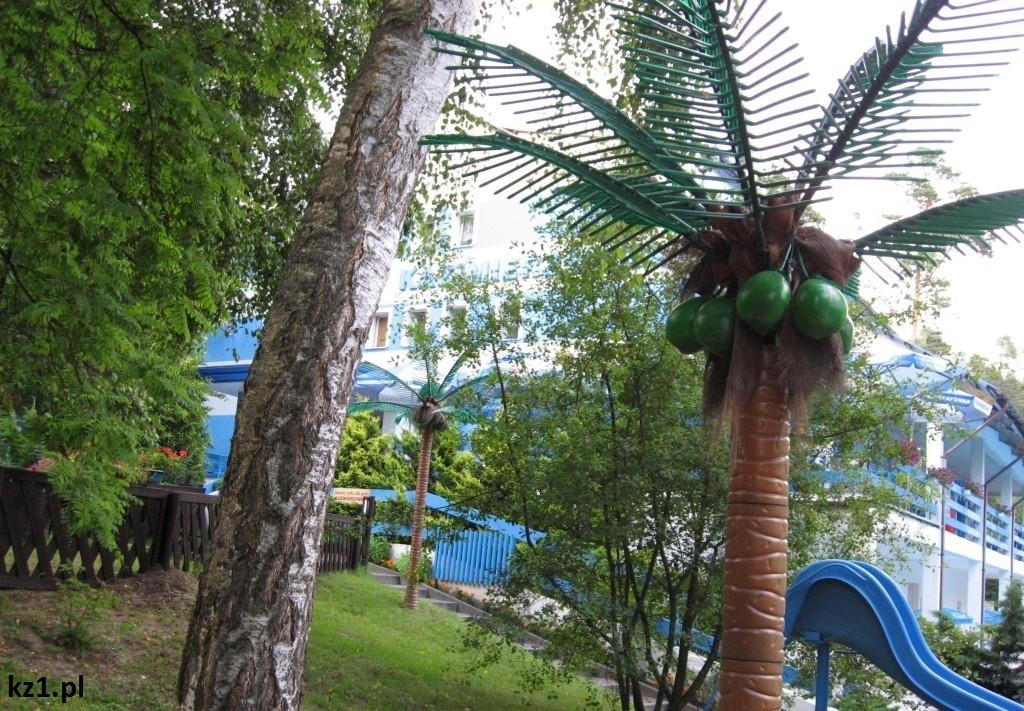 palma w stegnie