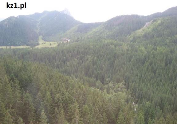 las widziany w góry